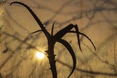 Sonnenuntergang durch misted Glas, im Vordergrund eine Aloeblume stockfoto