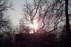 Sonnenuntergang durch silhouettierte Bäume Lizenzfreies Stockfoto