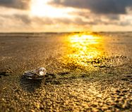 Sonnenuntergang-Eheringe auf Ozean-Ufern lizenzfreies stockfoto