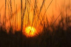 Sonnenuntergang in einem Gras stockbilder