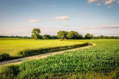 Sonnenuntergang an einem romantischen Weg in der Duch-Sommerlandschaft Twente Lizenzfreie Stockfotos