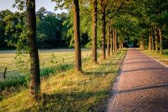 Sonnenuntergang an einem romantischen Weg in der Duch-Sommerlandschaft Twente Stockbild