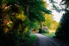 Sonnenuntergang an einem romantischen Weg in der Duch-Sommerlandschaft Twente Stockfotografie
