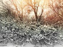 Sonnenuntergang in einem schönen Winterpark Stockbilder
