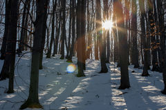 Sonnenuntergang in einem schneebedeckten Wald und in einem Blendenfleck Stockfoto