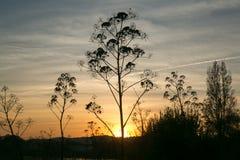 Sonnenuntergang in einem See Lizenzfreies Stockbild