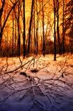 Sonnenuntergang in einem Winterwald Lizenzfreies Stockbild