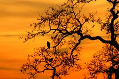 Sonnenuntergang-Falken Lizenzfreie Stockfotografie