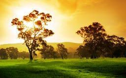 Sonnenuntergang-Feld Stockbilder