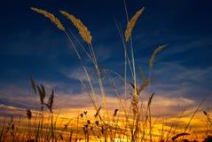 Sonnenuntergang-Feld Stockfoto