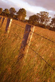 Sonnenuntergang-Feld Stockbild