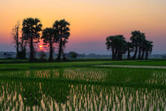 Sonnenuntergang am Feld Lizenzfreie Stockbilder