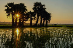 Sonnenuntergang am Feld Stockfotos