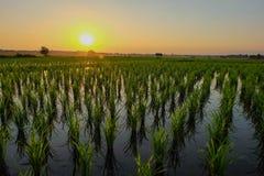 Sonnenuntergang am Feld Stockbild