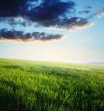 Sonnenuntergang, Feld des grünen Grases und blauer bewölkter Himmel Lizenzfreie Stockfotos