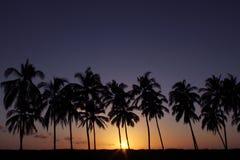 Sonnenuntergang gegen Palmen in Costa Rica Stockbild