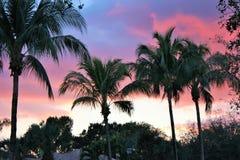 Sonnenuntergang in gesättigtem gelbem Abendhimmel und Purpur mit SchattenbildPalmen in Cala Estancia, Mallorca, Baleareninseln, S Stockbilder