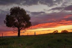 Sonnenuntergang Greenthorpe Australien Lizenzfreie Stockbilder