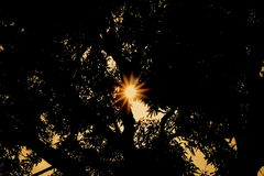 Sonnenuntergang hinter altem Mangobaum Lizenzfreie Stockfotos