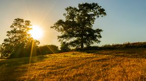 Sonnenuntergang hinter Bäumen und Feld des Weizens stockfotos