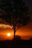 Sonnenuntergang hinter Baum Stockbild