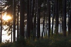 Sonnenuntergang hinter Baum im Wald über Fluss Stockbilder