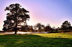 Sonnenuntergang hinter dem Baum Lizenzfreie Stockfotos