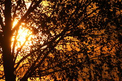 Sonnenuntergang hinter dem Baum Stockbild