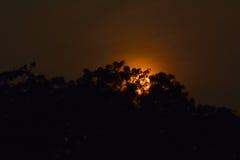 Sonnenuntergang hinter dem Baum Stockfotografie