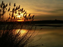 Sonnenuntergang hinter dem Schilf Lizenzfreie Stockfotos