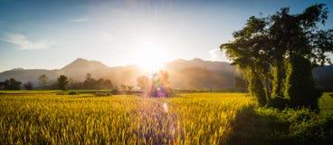 Sonnenuntergang hinter den Bergen auf dem Reisgebiet Stockfoto