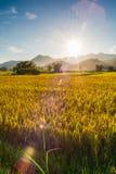 Sonnenuntergang hinter den Bergen auf dem Reisgebiet Lizenzfreie Stockfotografie