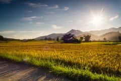 Sonnenuntergang hinter den Bergen auf dem Reisgebiet Stockfotografie