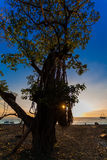 Sonnenuntergang hinter einem Baum Lizenzfreie Stockbilder