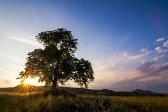 Sonnenuntergang hinter einem Baum Stockbilder
