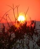 Sonnenuntergang hinter einem Spinnenweb. Stockfotografie