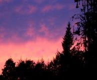 Sonnenuntergang hinter Kiefern Lizenzfreies Stockbild