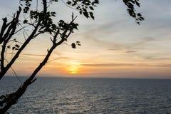 Sonnenuntergang hinter Schattenbaum Stockfotografie