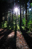 Sonnenuntergang in Holz. Lizenzfreie Stockfotos