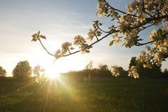 Sonnenuntergang im Apfelgarten Lizenzfreie Stockbilder