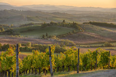 Sonnenuntergang im Chianti Stockfotografie