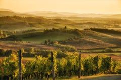 Sonnenuntergang im Chianti Lizenzfreies Stockbild