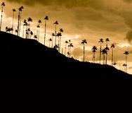 Sonnenuntergang im Cocora Tal, Kolumbien stockbild