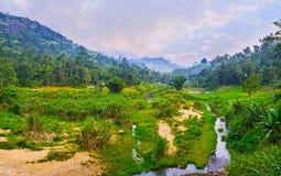 Sonnenuntergang im Dschungel, Sri Lanka Lizenzfreies Stockfoto