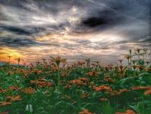 Sonnenuntergang im Garten Lizenzfreie Stockfotografie