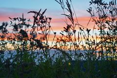 Sonnenuntergang im Gras lizenzfreies stockbild
