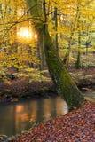 Sonnenuntergang im Herbst stockfotografie
