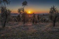Sonnenuntergang im Herbst in der toskanischen Landschaft lizenzfreie stockbilder