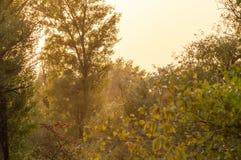 Sonnenuntergang im Herbstwald Lizenzfreie Stockfotos