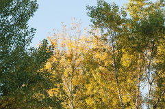 Sonnenuntergang im Herbstwald Stockbilder